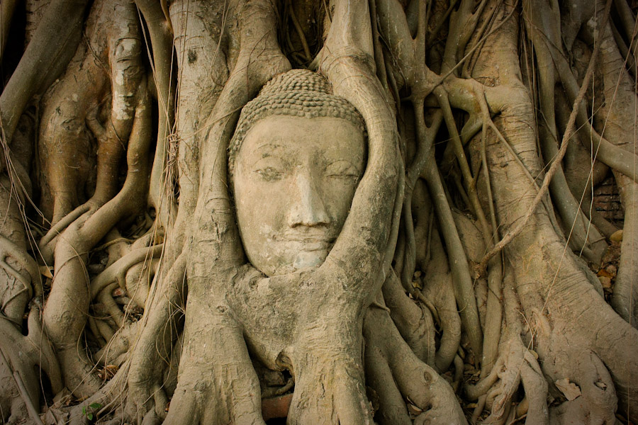 Buddha and roots, Wat Phra Mahathat