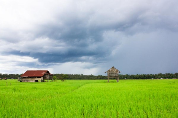 Photo of the Week: Rice Fields and Rain Clouds in Laos