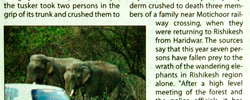 Thumbnail image for Elephant Killing Spree in Rishikesh