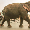 Thumbnail image for Rush Hour and the Elephant