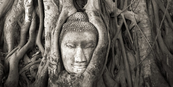Buddha statue and tree roots -- Thailand
