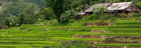 Photo Friday: Rice Fields Near Sapa
