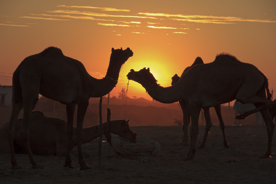 Photos from the Pushkar Camel Fair, Part 1