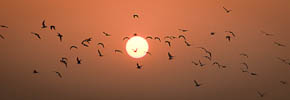 Photo of the Week: Birds Over the Ganges at Sunrise