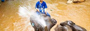 Photo of the Week: An Elephant Attack in Chiang Mai!