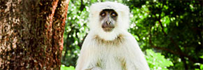 Travel Photo of the Week: A Formal Portrait of a Monkey