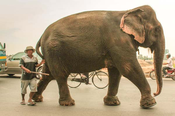 Rush Hour and the Elephant, Cambodia